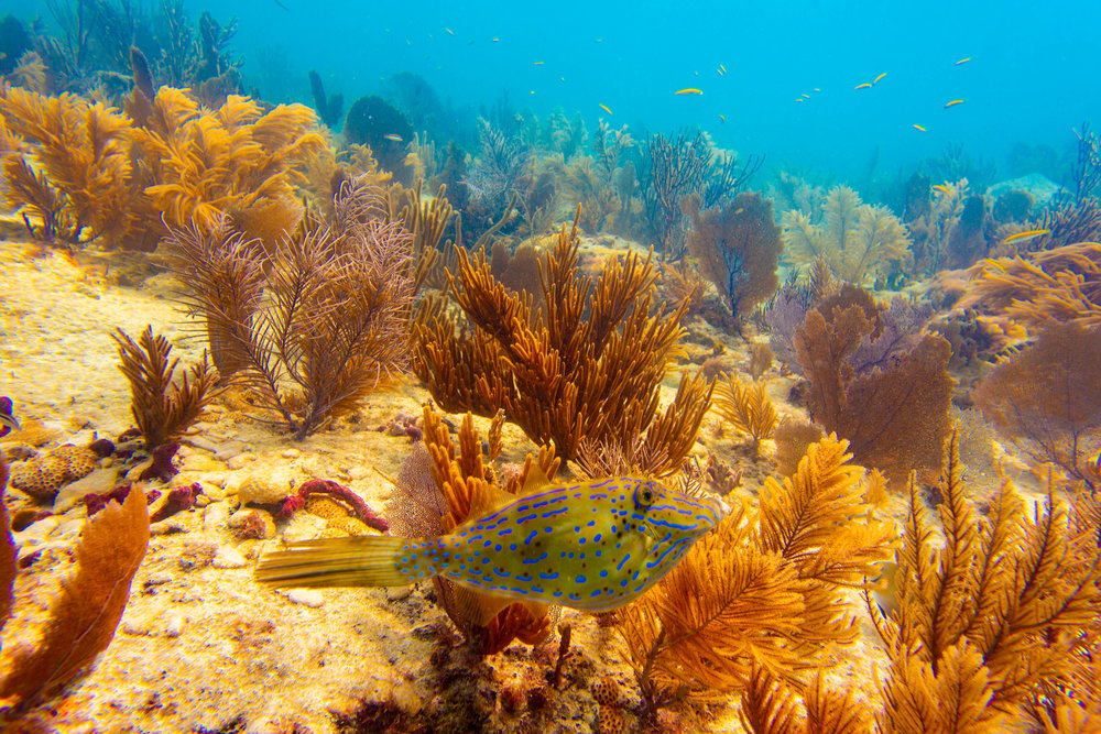 Anglers-Hotel-Reef-ve_steve-boxall-20180614_0142.jpg