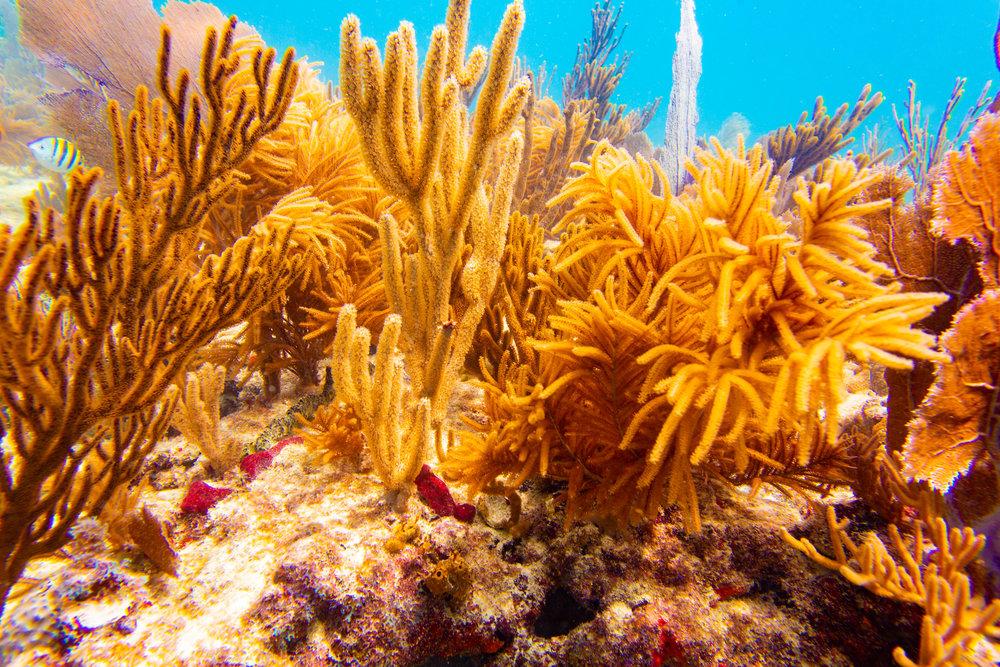 Anglers-Hotel-Reef-ve_steve-boxall-20180614_0387.jpg