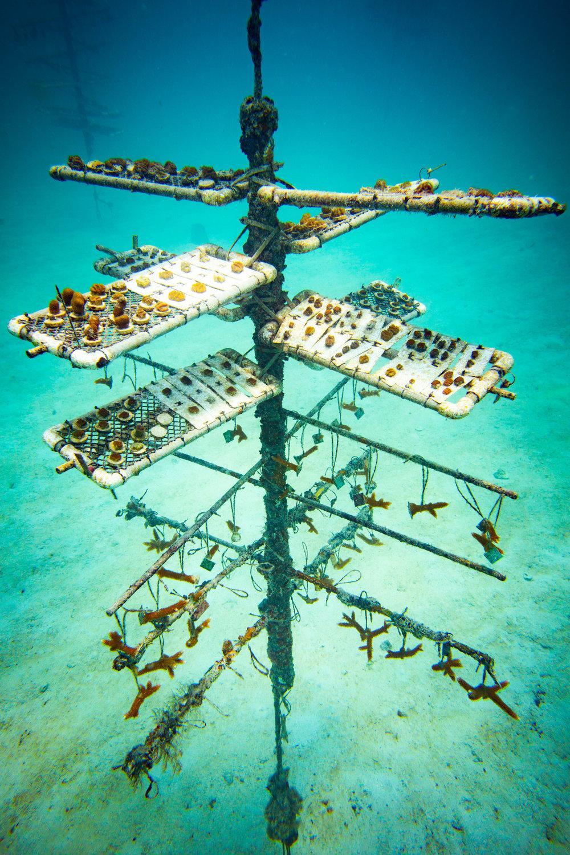 Anglers-Hotel-Reef-ve_steve-boxall-20180614_0701.jpg