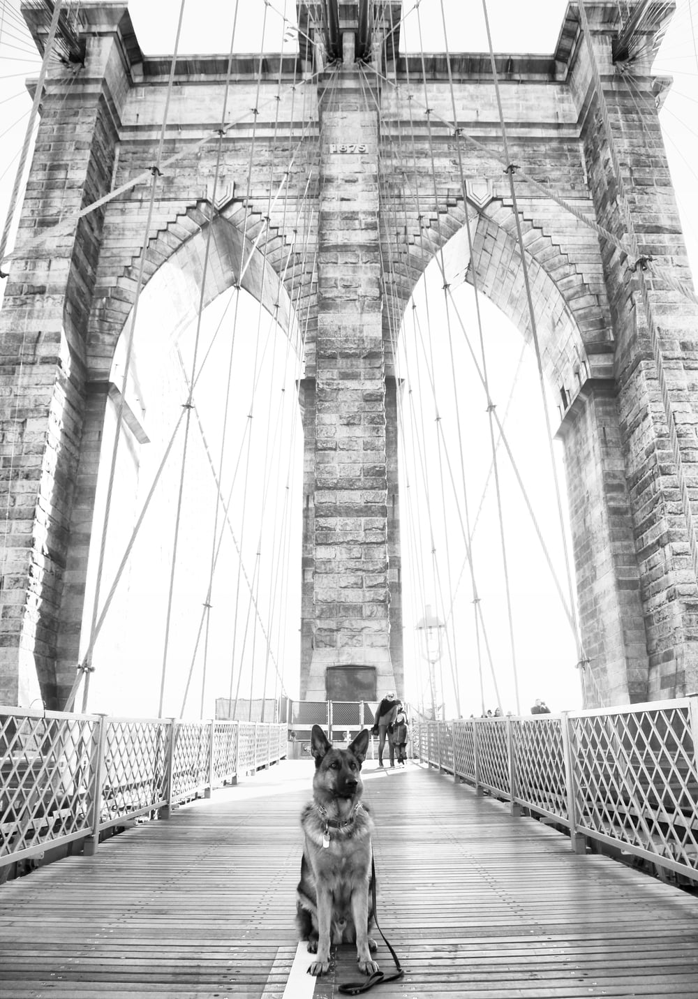 MaQ & the Brooklyn Bridge . Doesn't he look majestic AF? :)
