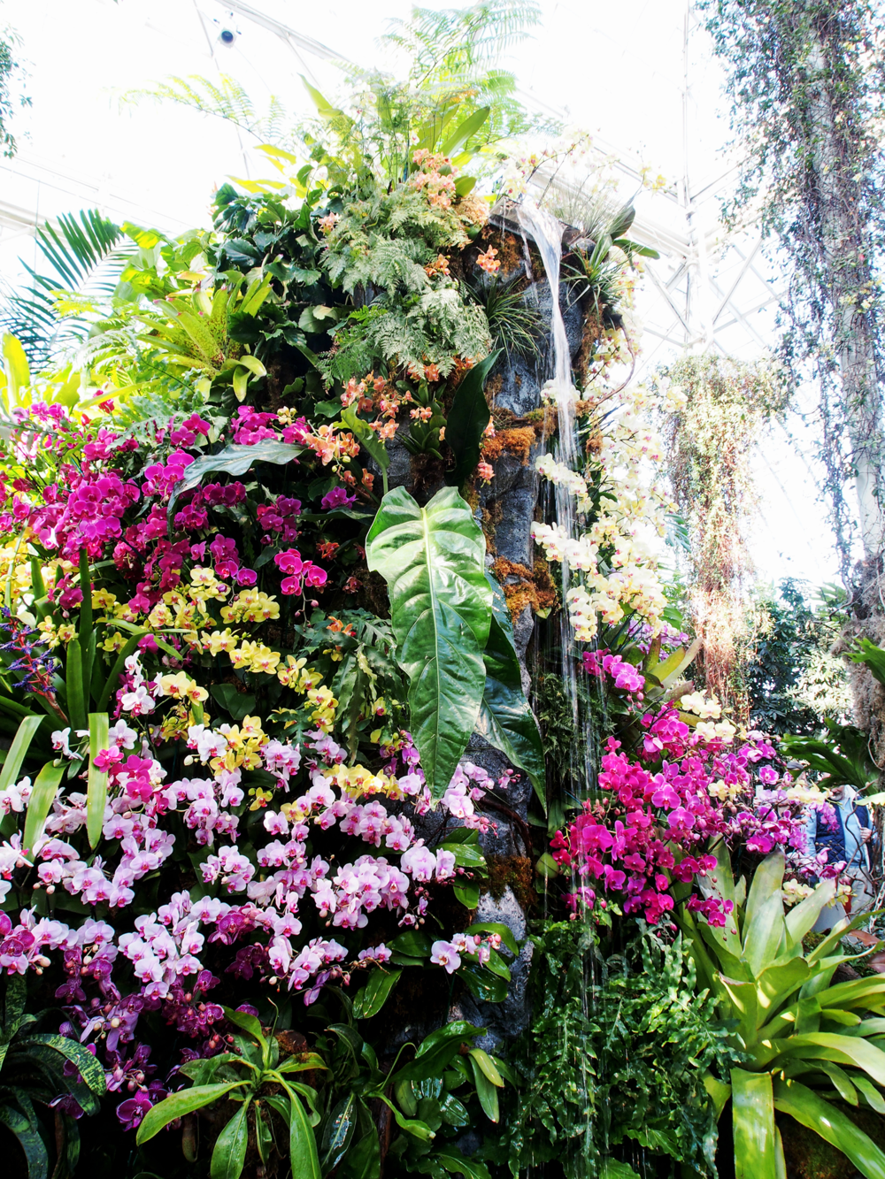 Front & center: The signature centerpiece through the center of the exhibition; an utter wonderment of whimsical vibrant orchids and tropical plants climbing a towering waterfall.