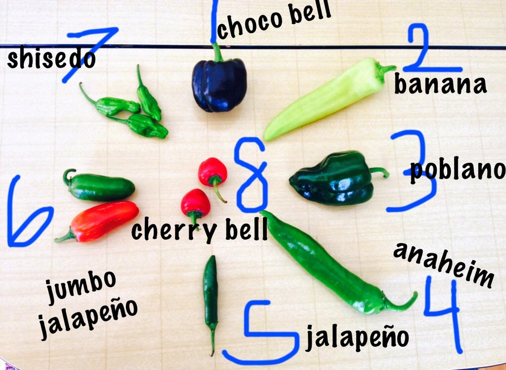 This week's pepper bounty came in many shapes and sizes.  Check out this diagram to see which ones are spicy and which ones are sweet!