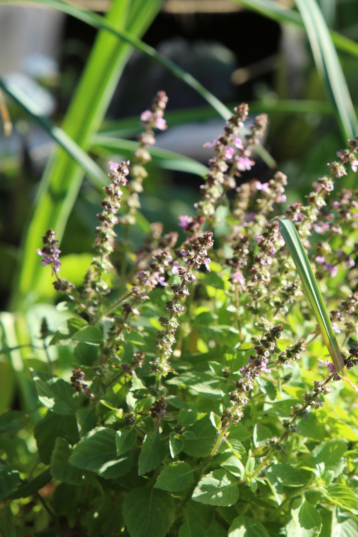 seedsaving.jpg