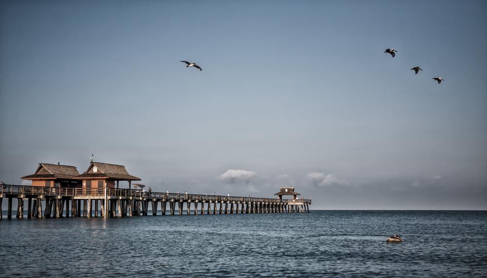 Naples-Pier-Pelicans_IMG_1081-2.JPG