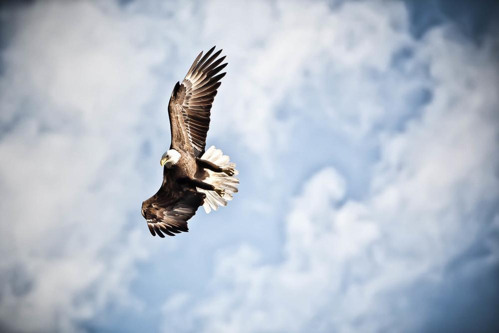 Eagle_9422-4500x3000.jpg