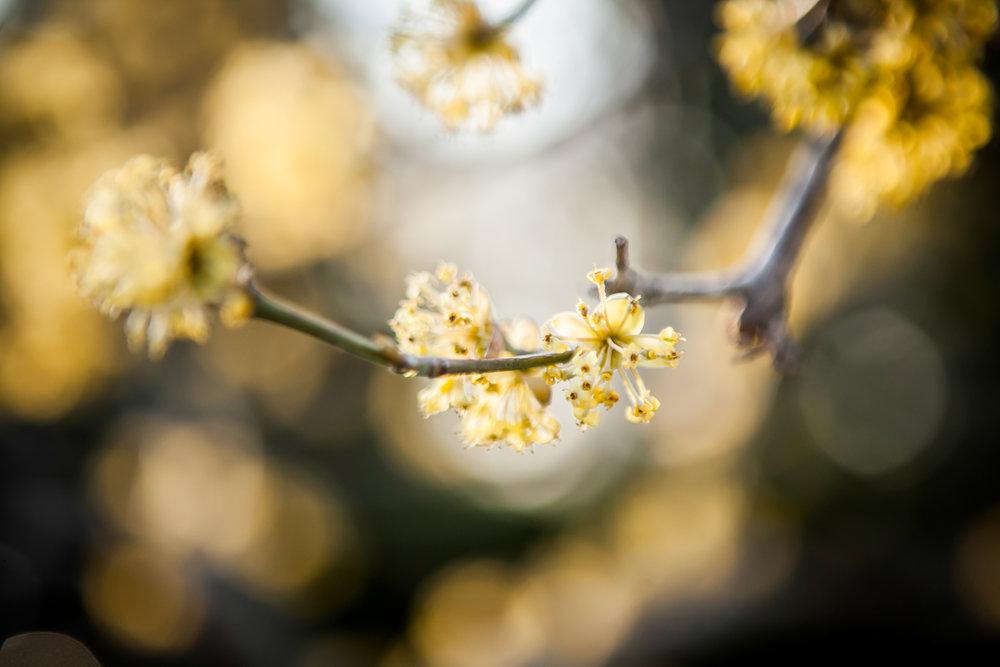 Spring Blossom_IMG_5833_20x30-300-dpi_Standout.jpg
