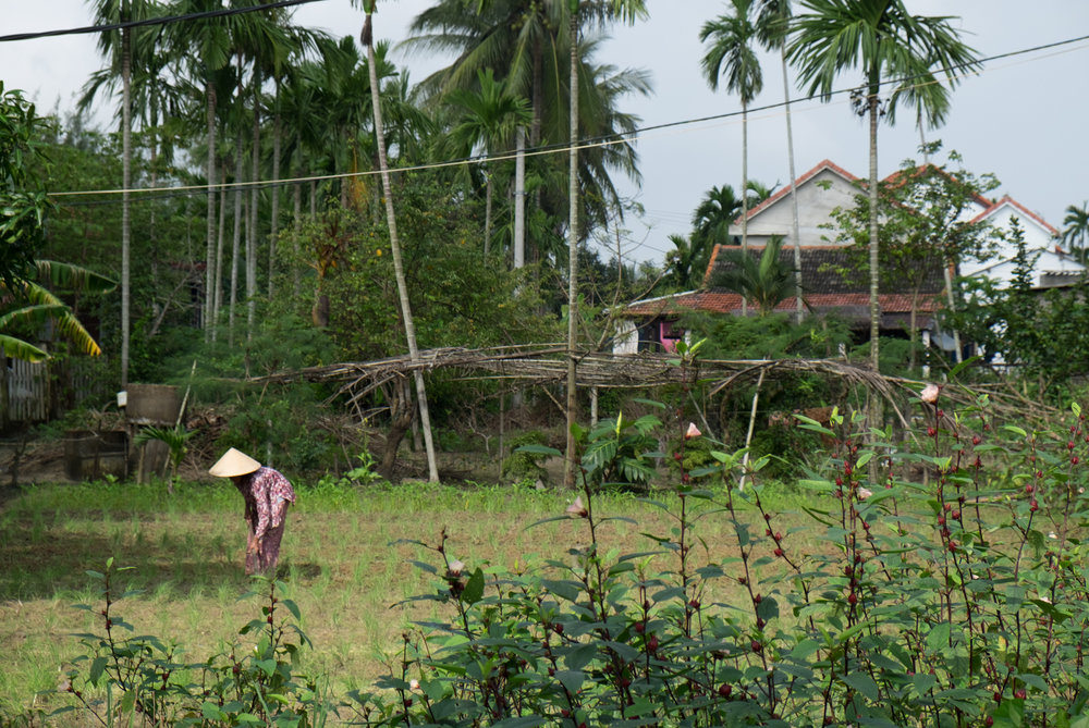 Vietnam-Hoian_5869.jpg