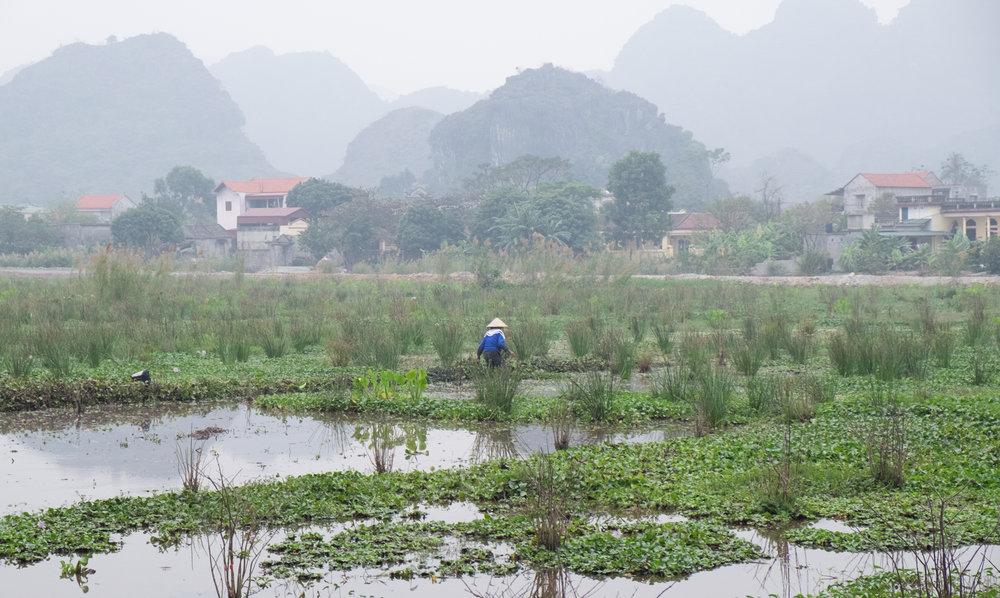 Vietnam-Ninh-Binh_5563.jpg