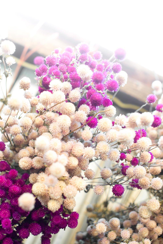 Flowers 1-8.jpg
