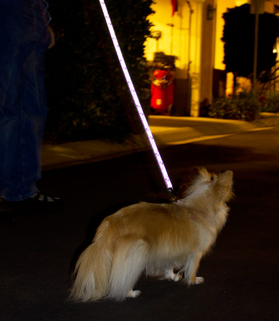 walking dog with Lazer Brite leash