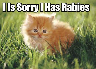 kitten rabies