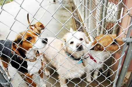 dogs in shelter