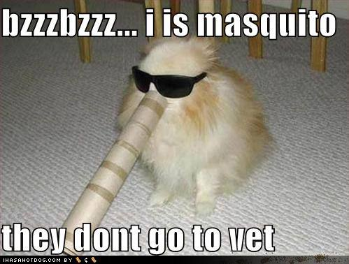 funny dog picture about mosquitoes