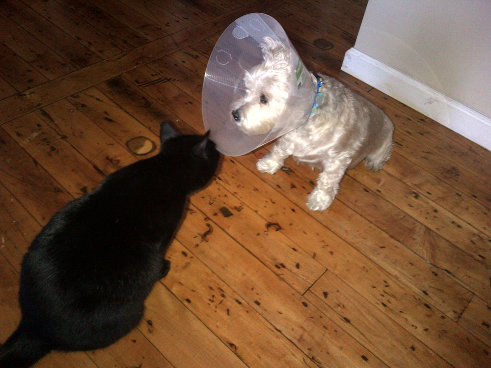 dog in cone with cat looking at it