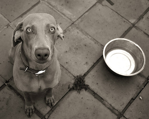 dog begging for food