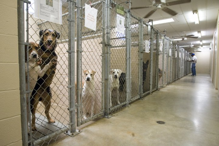 dogs at animal shelter