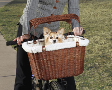 dog in a bicycle basket