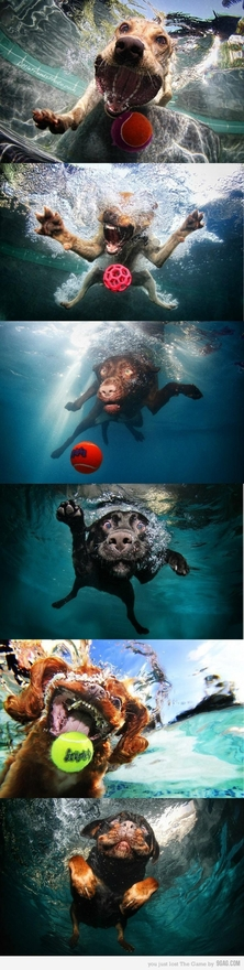 underwater dog photos
