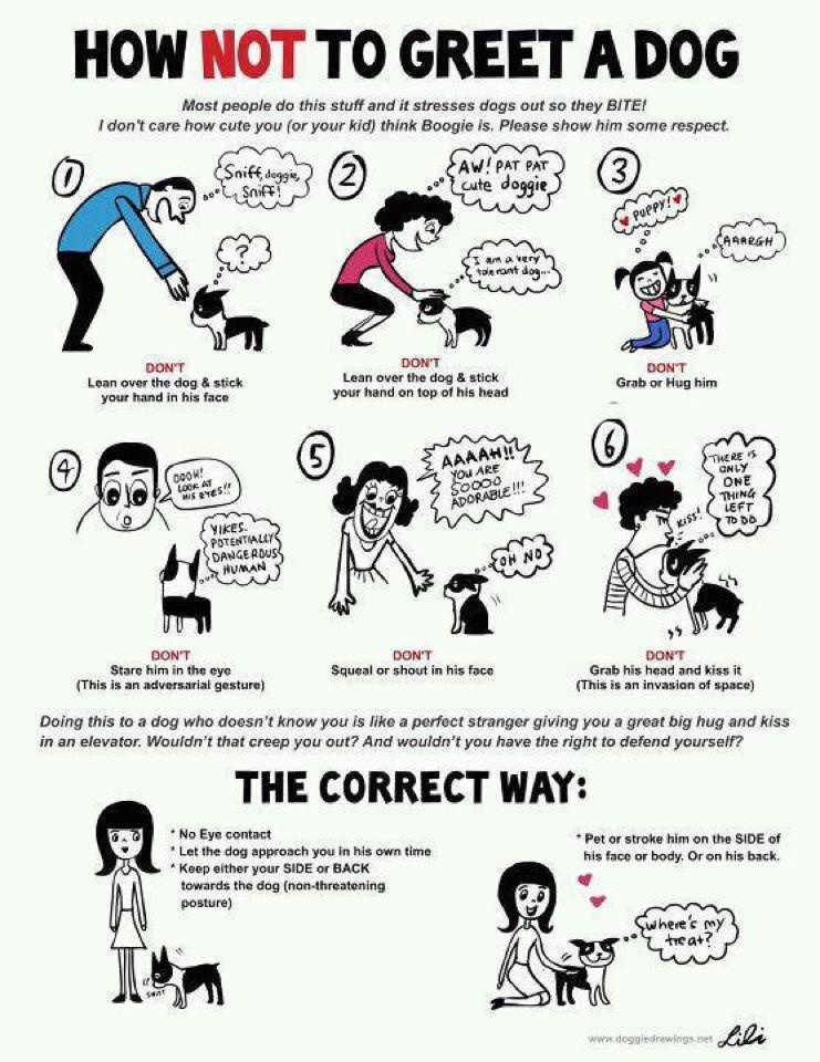 How to greet a dog