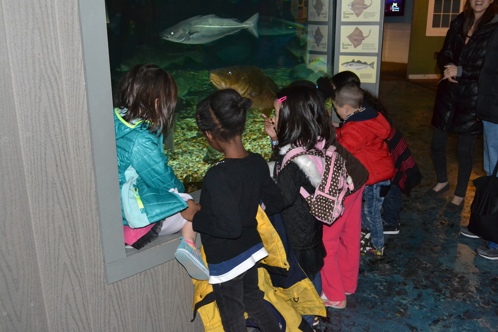 K-7th Grade Field Trip to Maritime Aquarium.