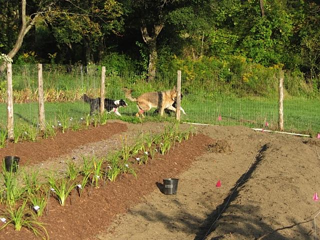 Historic daylily garden.jpg
