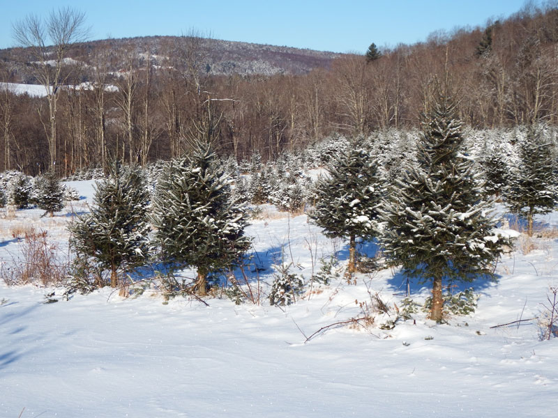 Tree cutting from 9 a.m.-4 p.m. at LH Stowell & Son Christmas Trees, 1591 Twin Pond Road, Brookfield, VT. All ages.