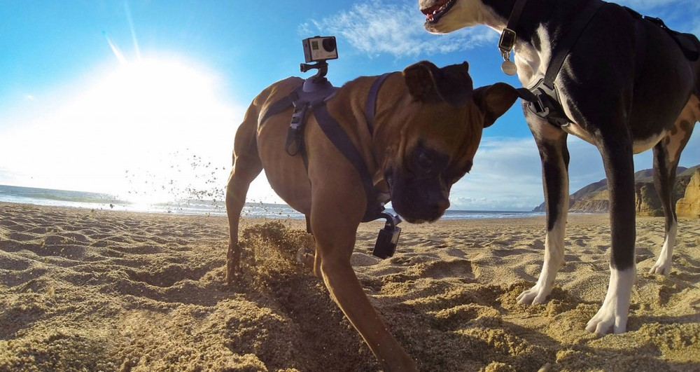 gopro-fetch-1-1280x680.jpg