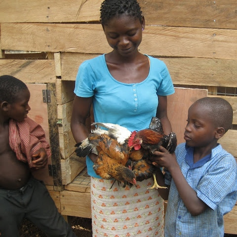 Chicken coops provide a sustainable source of protein, and eggs may be sold to generate income.