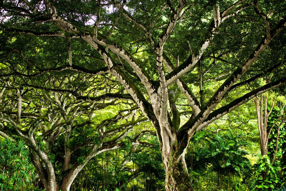 tree  0114.JPG