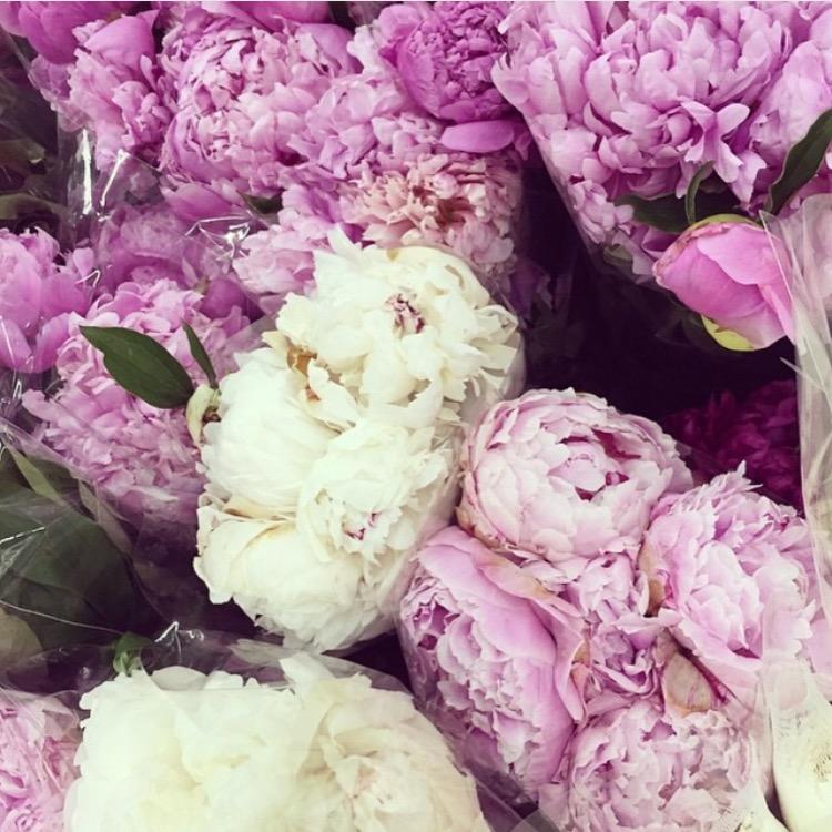 My favorite flowers in bloom - Peony