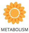 metabolism-icon.png