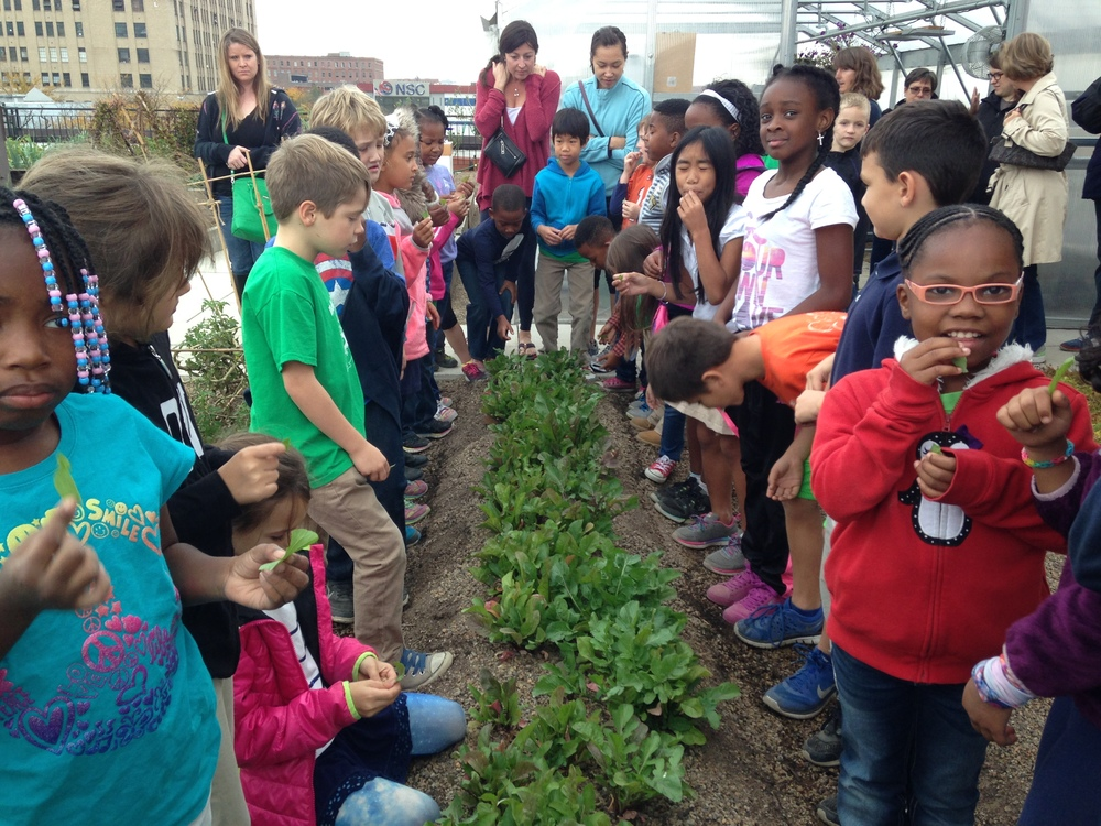 Group of elementary kids and teachers gathered around a raised garden bed of greens on the FOOD ROOF Farm.
