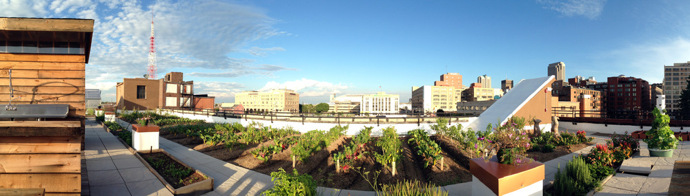 farm rows pictured with vegetables such as eggplant, side rail of building, and downtown st. louis in the background