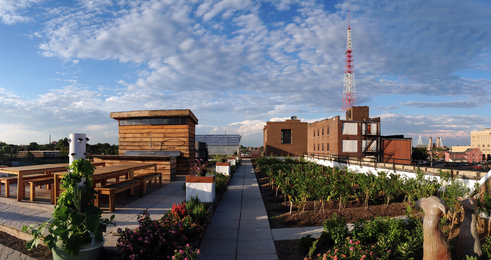 north facing shot of FOOD ROOF includes community hub space, rooftop walkways, green house in the background, blue and partly cloudy skies, and neighboring downtown building