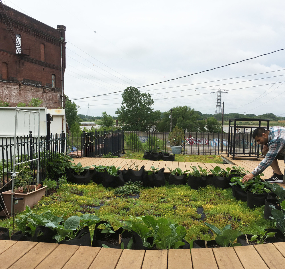 Kerr Food Roof with wooden walkways around green sedum that is surround by modular smart pots growing green vegetables. Mississippi pictured in the background.