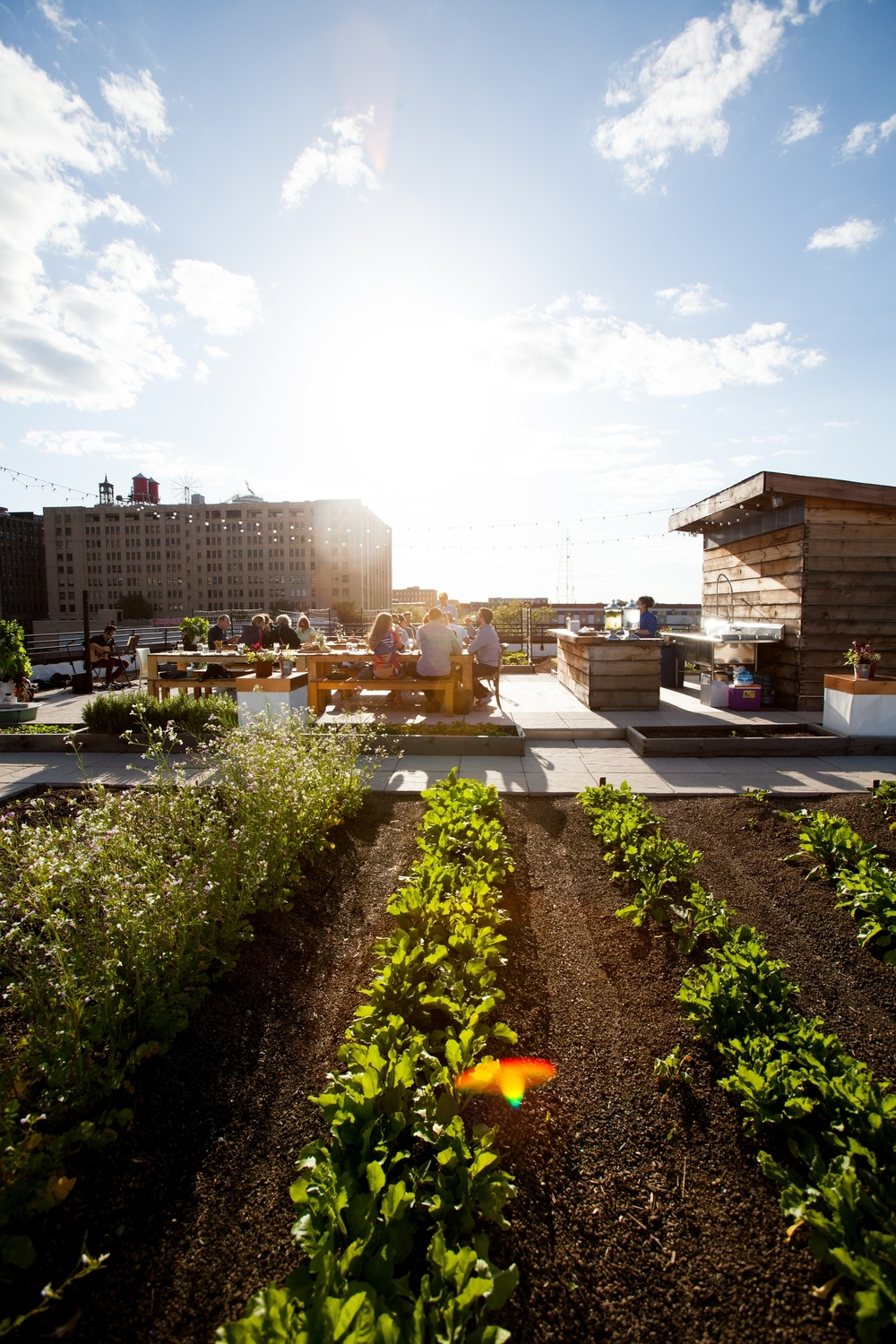 Rooftop farm rows in the foreground, people sitting on picnic tables in community hub space with counter, sink, and shed space, city museum rooftop in distance
