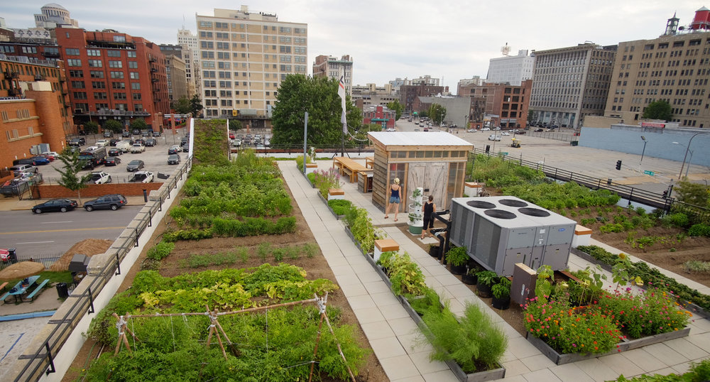 Entire view of the FOOD ROOF Farm featuring farm rows, walkways, greenhouse in foreground of downtown STL building scape.