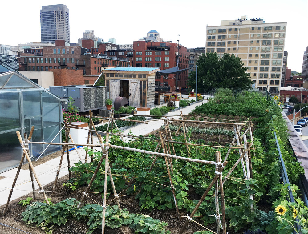 West perspective of farm showcasing trellises, greenhouse, farm rows, shed, and downtown buildings in the background.