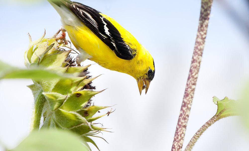 0806_BirdSeed_OD.jpg