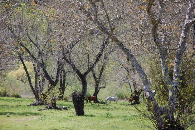 65-Acre Horse Property - $1,895,000