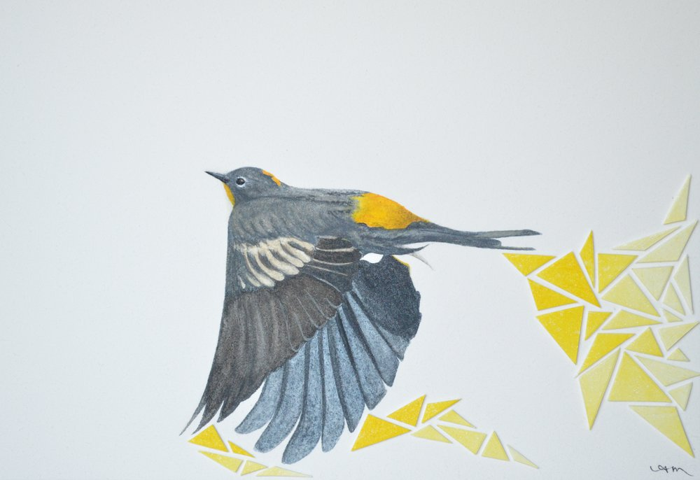 yellow-rumped warbler, watercolor on paper