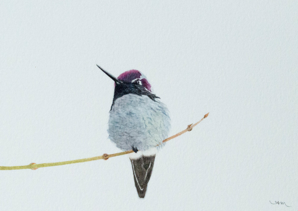 anna's hummingbird, watercolor on paper