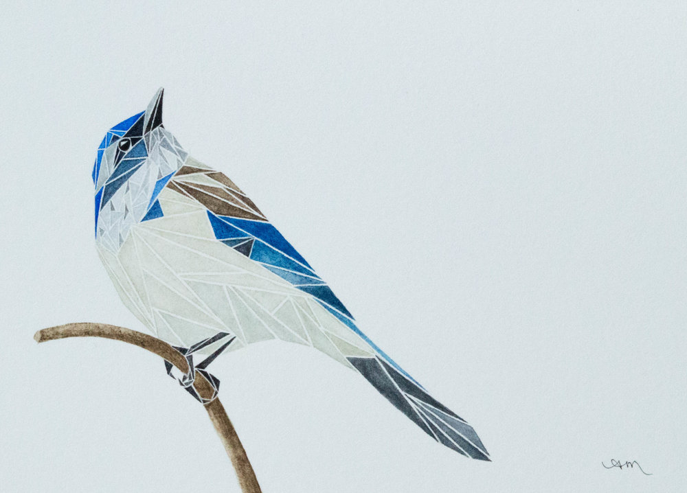 geometric coastal scrub jay, watercolor on paper *
