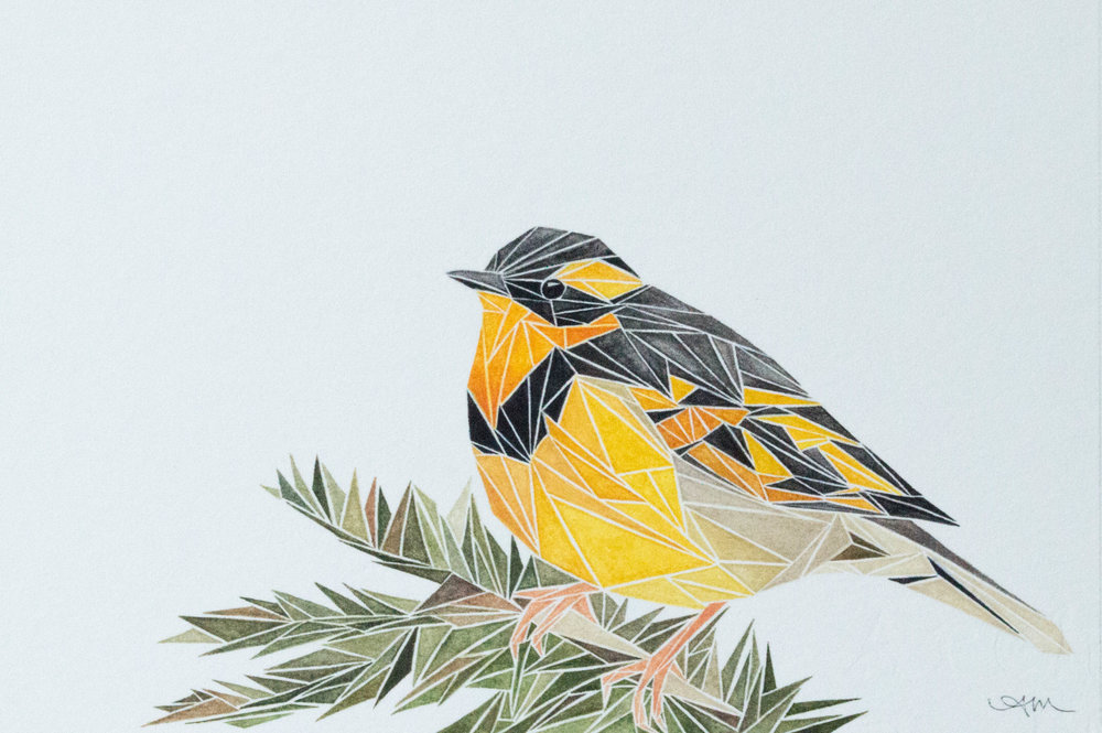 geometric varied thrush, watercolor on paper
