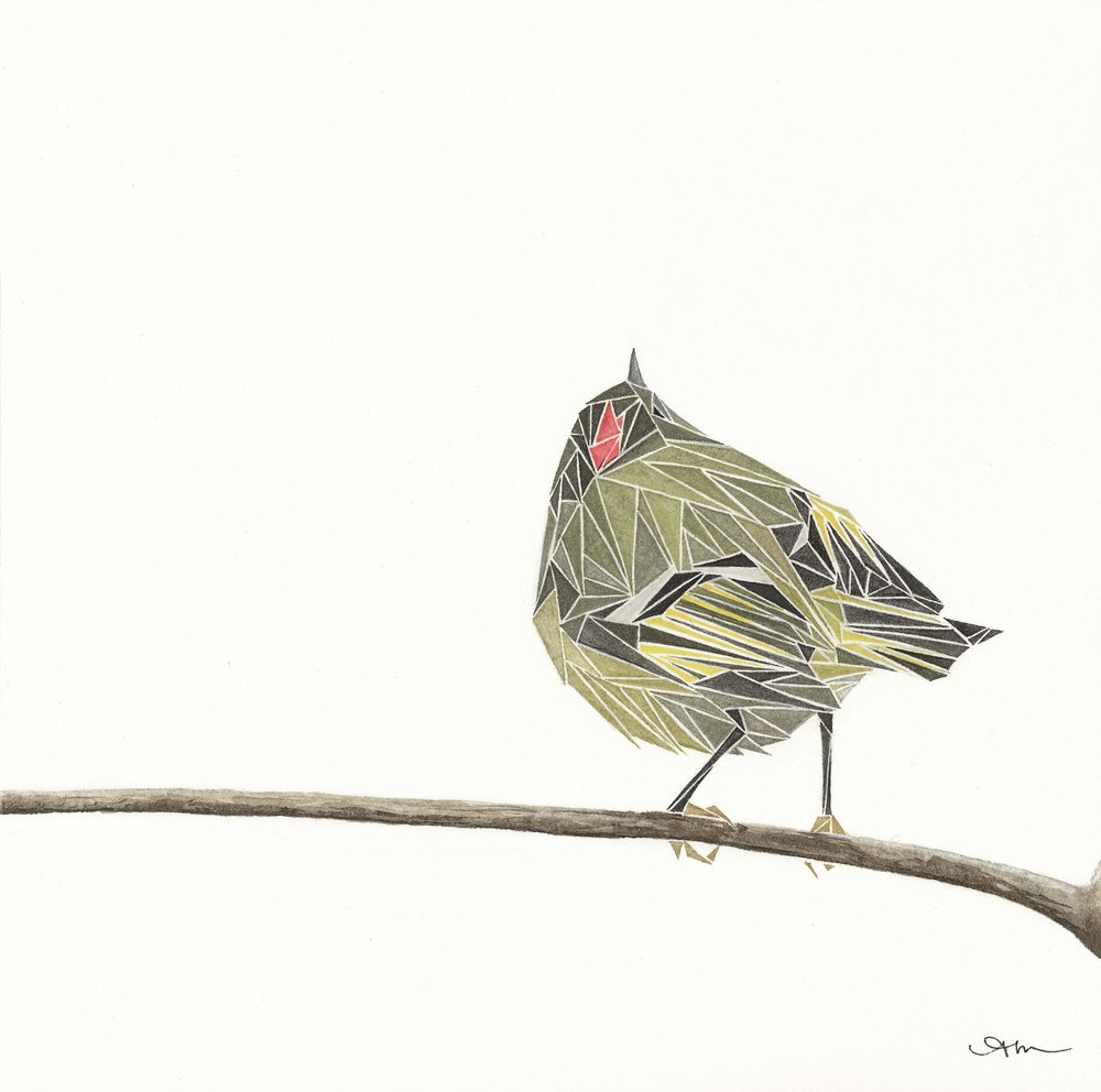 geometric ruby-crowned kinglet, watercolor on paper