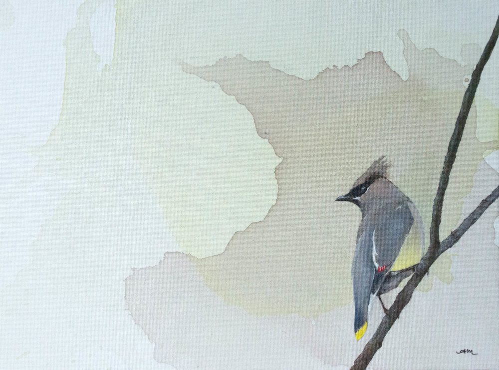 cedar waxwing, acrylic on canvas