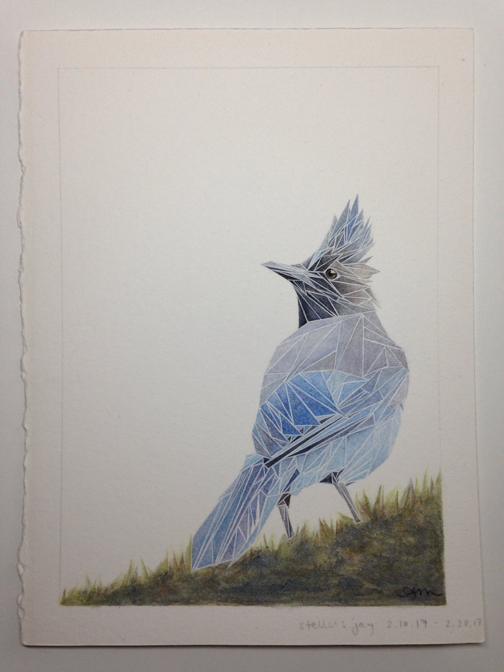 geometric steller's jay, watercolor on paper