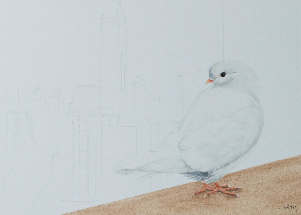 white or tesla's pigeon, watercolor on paper 2014 -AVAILABLE-