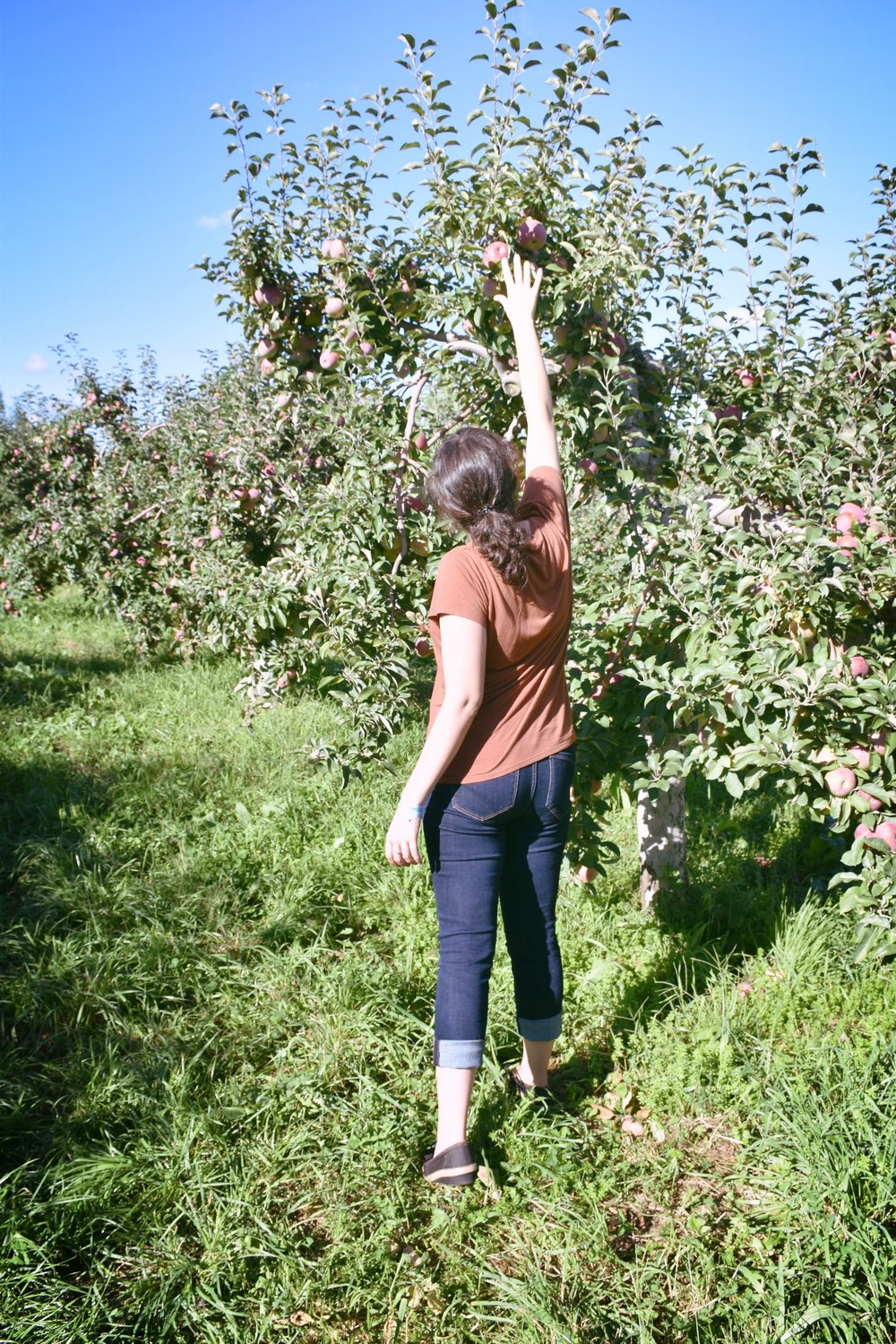 Apple picking in the Hudson River Valley.