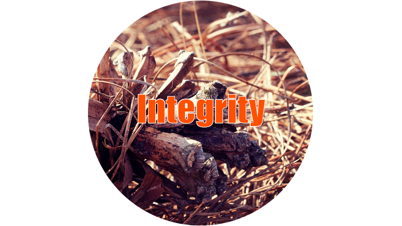 integrity-thumb.jpg